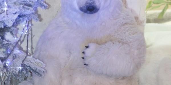 ours de noel